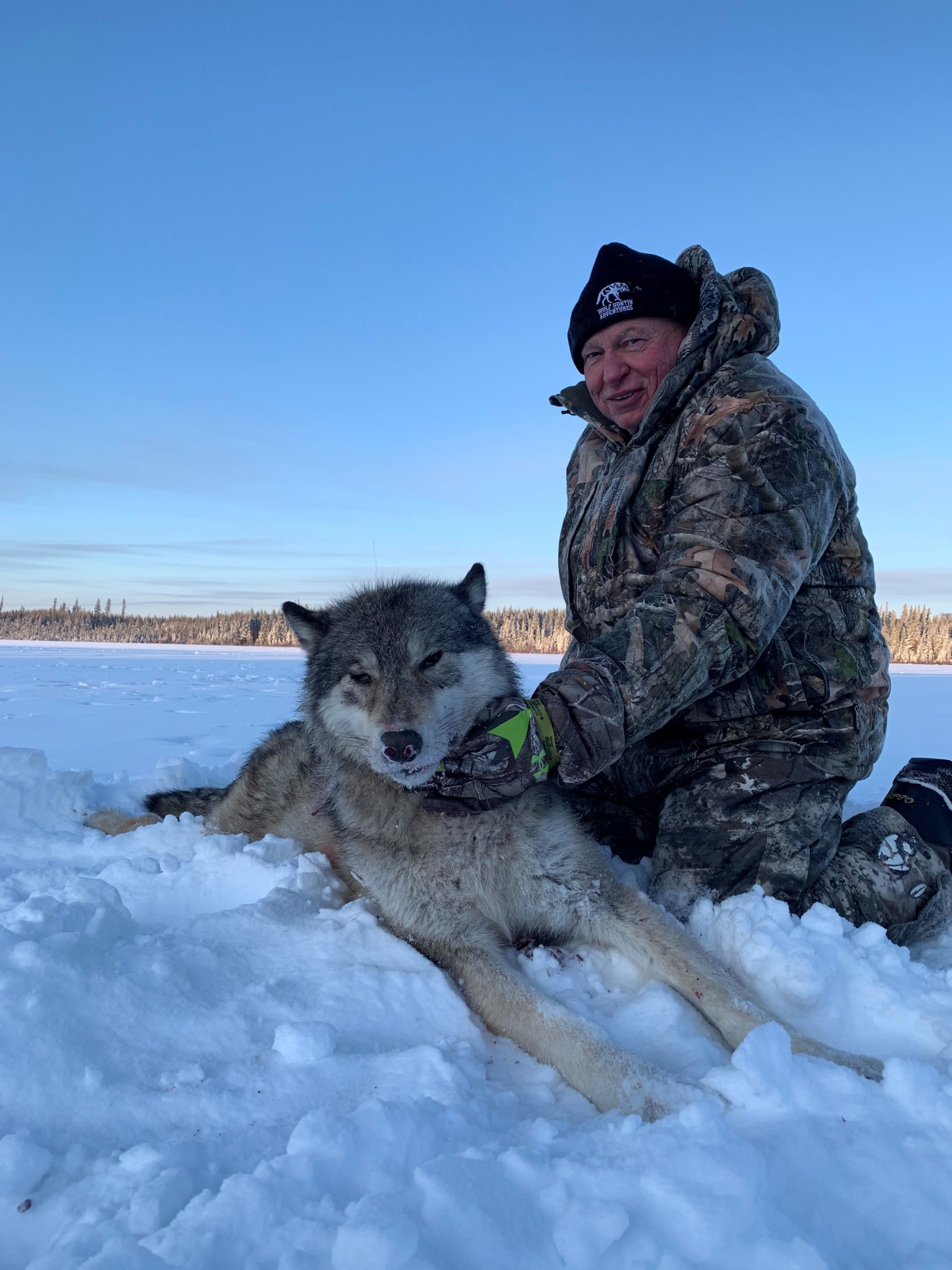 idaho-wild-sheep-wolf-hunt-1