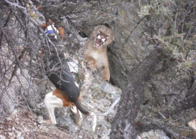 Lion hunt Howard Kem 2014 005